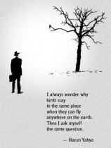 I always wonder why birds stay in the same place when they can fly anywhere on earth...