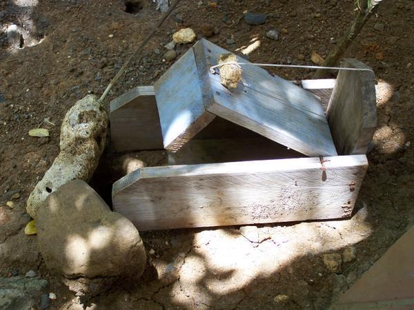 Zatrap, crab trap, Martinique