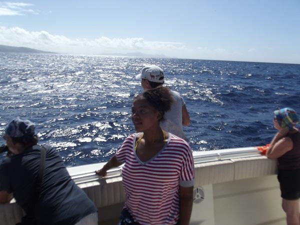 Dolphin trip in Martinique