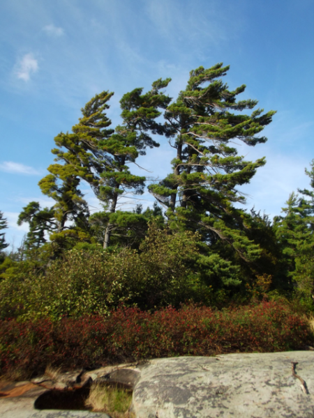 leaning trees, beausoleil island, things to do in toronto, day trips from toronto